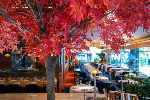 Celebra el año nuevo chino como un auténtico chino en estos restaurantes