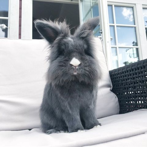 melvin the bunny - animals to follow on instagram