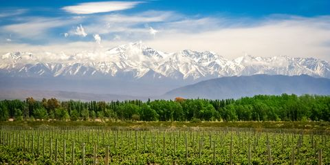 Mendoza, Argentina wine region
