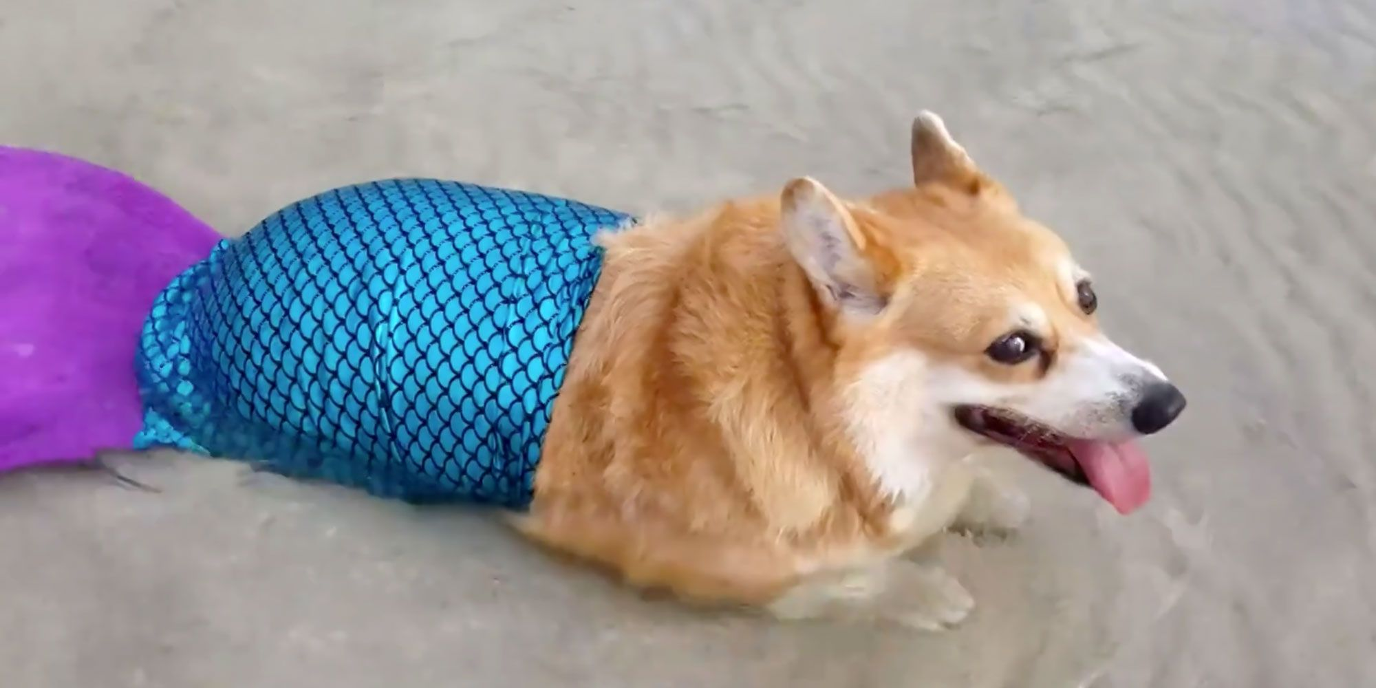 watch this dog fulfill her dream of becoming a mermaid