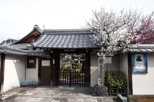 京都 知恩院の塔頭 松風天満宮(松宿院)に咲く桃の花