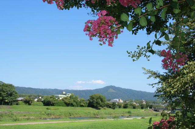 京都大文字山付近 さるすべり
