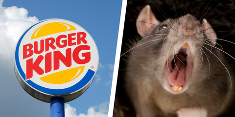 5f0e732745e Burger King Shuts Down After Viral Video Shows Rats Running Over Buns