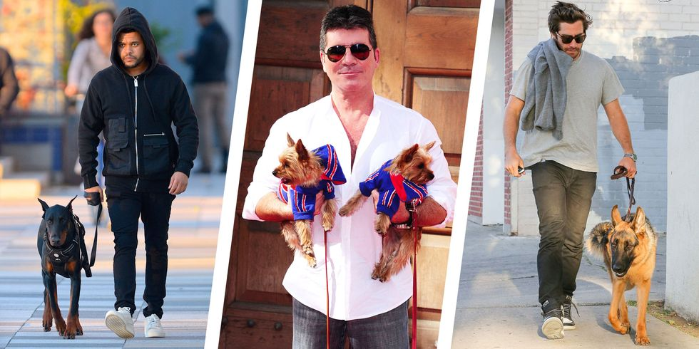 The Dog Breeds Celebrities Own and Love thumbnail