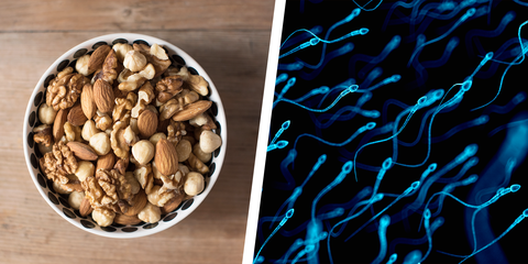 Eating Nuts Could Make Sperm Healthier - Nuts Linked to