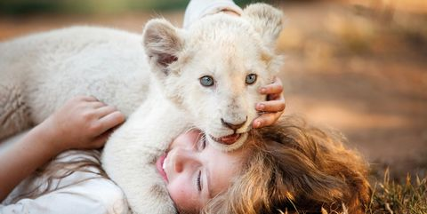 'Mia y el león blanco'