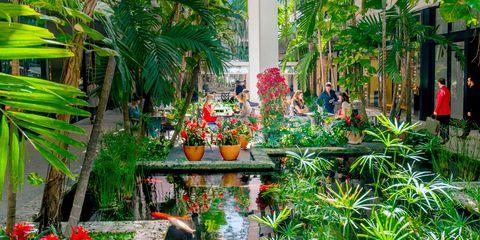 Vegetation, Botanical garden, Garden, Botany, Biome, Plant, Houseplant, Tree, Flower, Terrestrial plant,