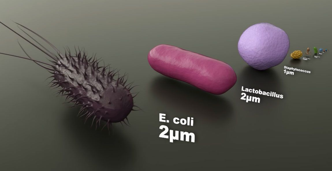 A Cg Video Guide To The Size Of Microorganisms