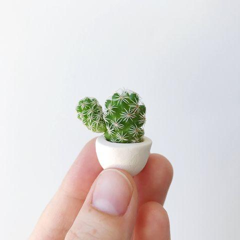 Micro cactus con flores blancas