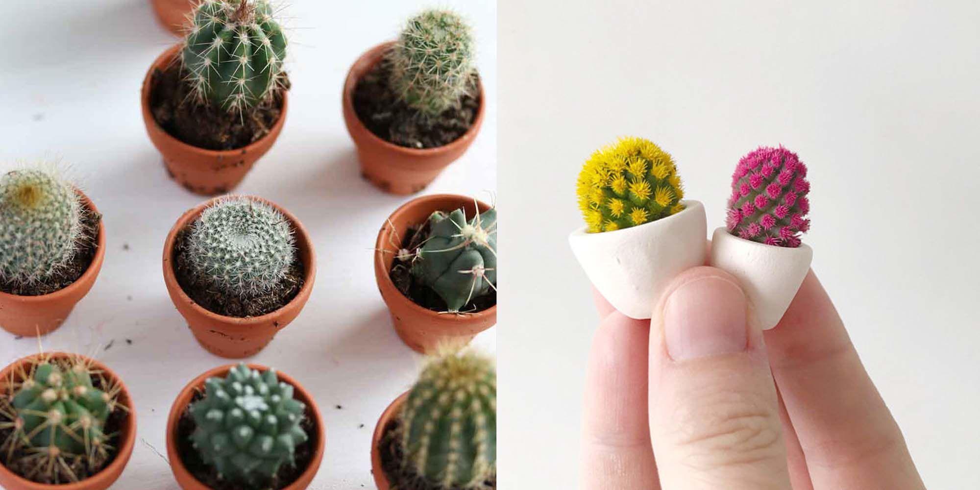 micro-cactussen, trend, micro, cactus, cactussen, mini-cactussen, cactussen, mini,