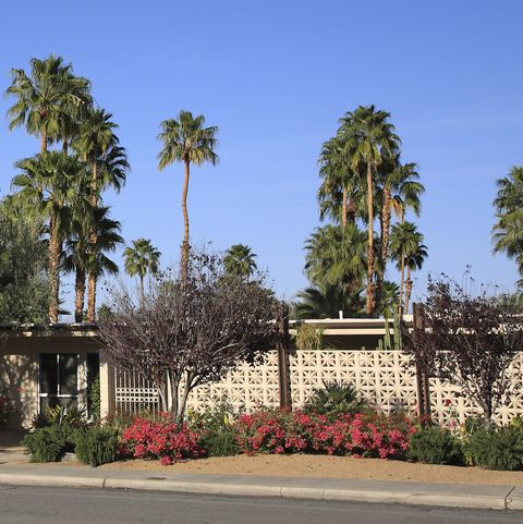 Mid Century Garden With Curb Appeal