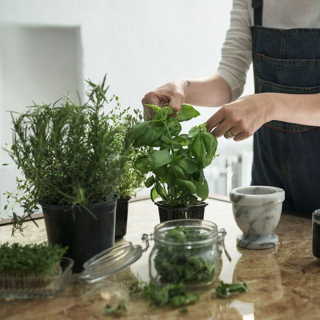 Best herbs to grow indoors for cooking and essential oils