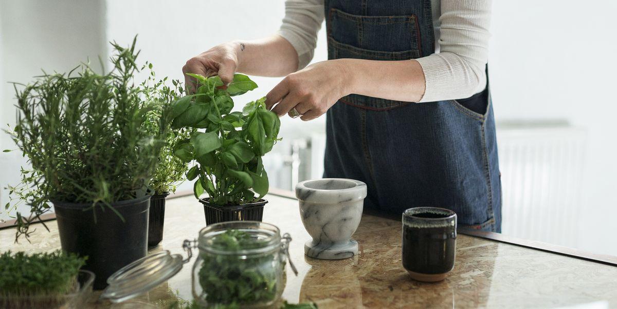easiest herbs  grow  indoor  outdoor gardens