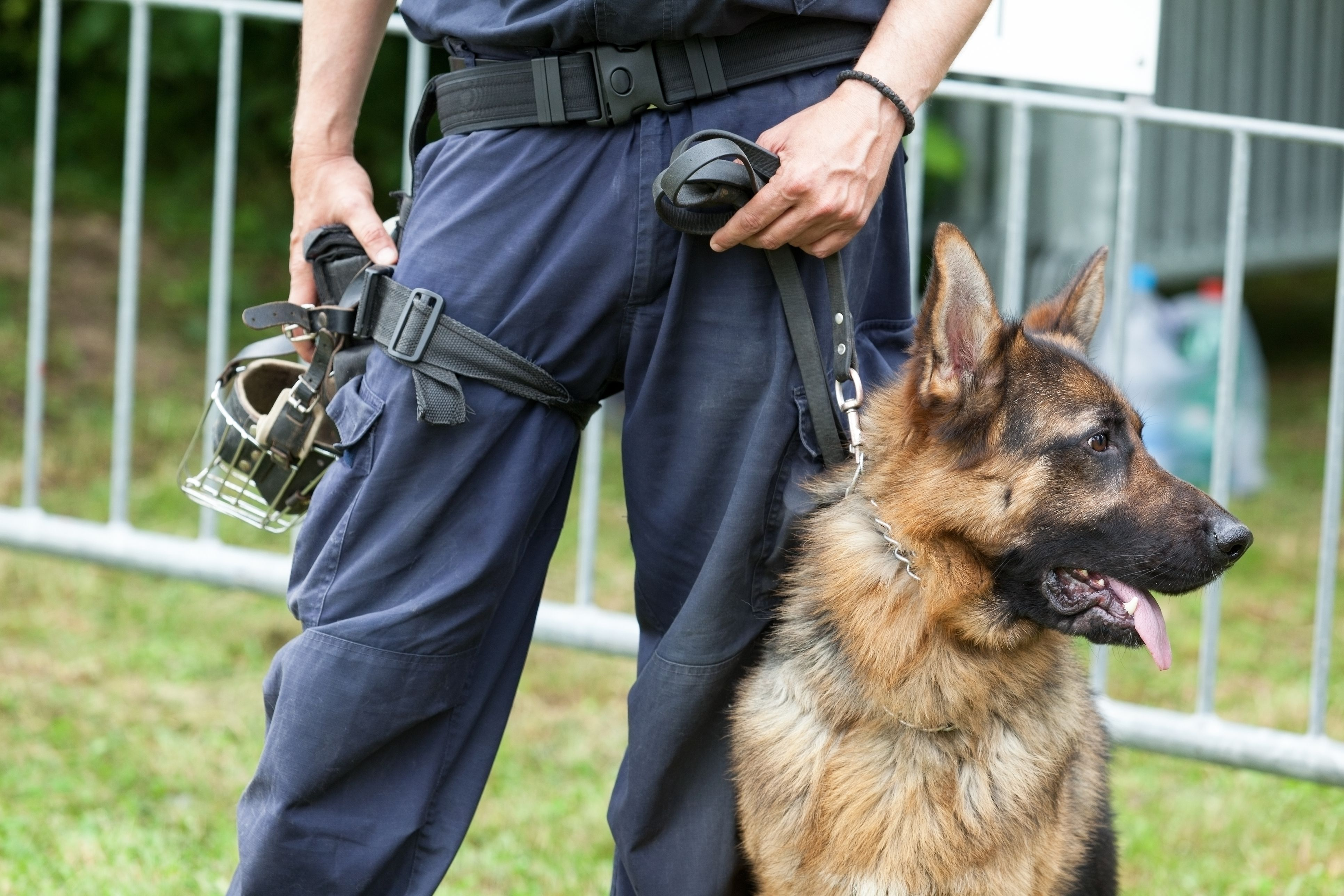 This Video of Dogs Being Trained to Intervene in School Shootings Is Highly Upsetting