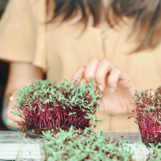 how to grow your own microgreens, explained midsection of woman holding plants on table