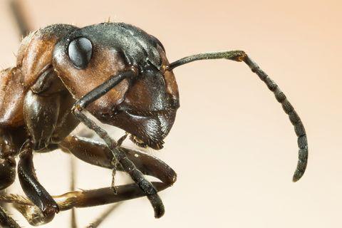 zo-overleven-mieren-de-winter