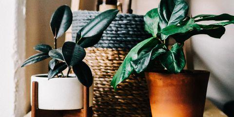 10 Semplici Piante Da Appartamento Che Richiedono Poche Cure