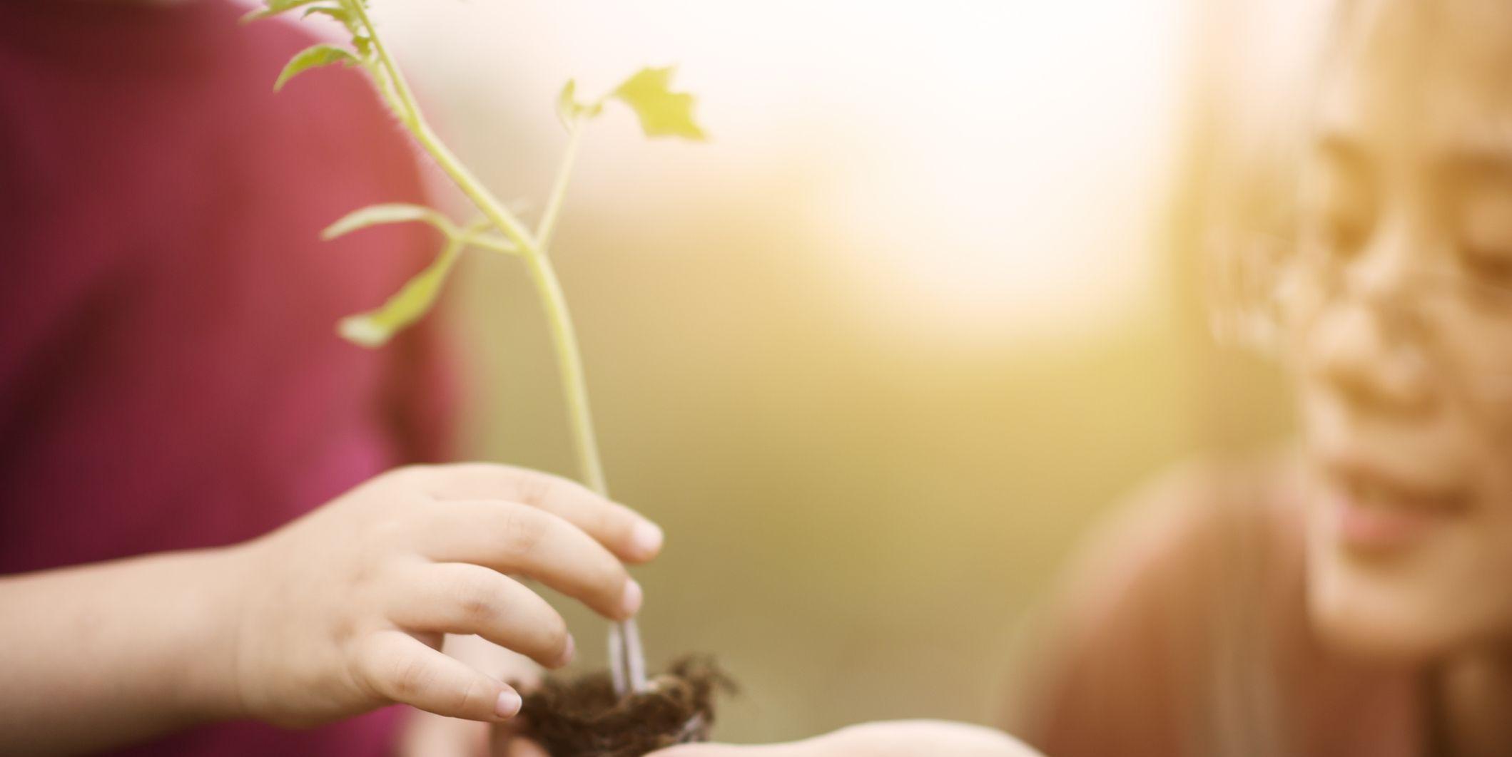 Zen in Zeven Dagen: vriendelijkheid