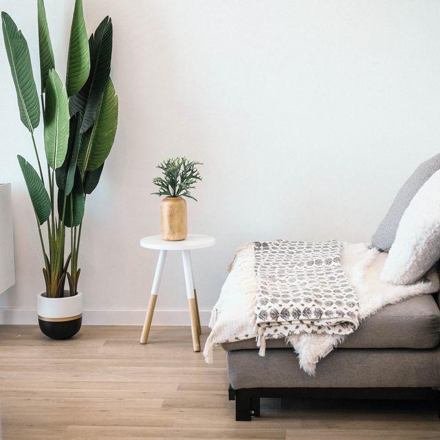 Wood, Flowerpot, Flooring, Floor, Interior design, Wood flooring, Hardwood, Interior design, Grey, Laminate flooring,