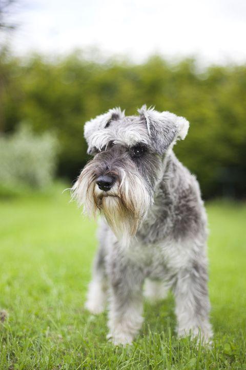 hypoallergenic pet breeds