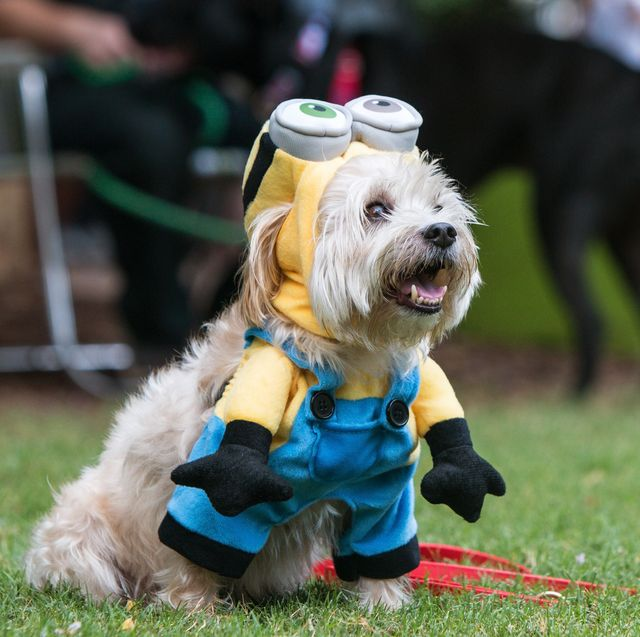 14 Diy Minion Costume Ideas