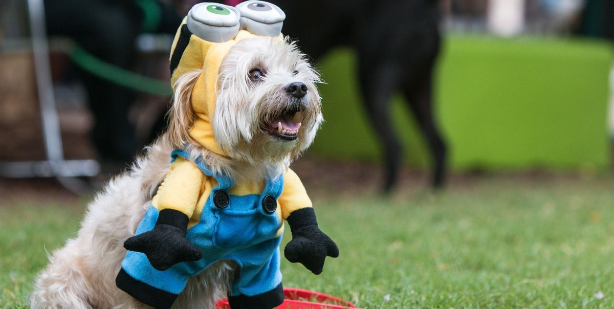 Minion Halloween Costumes the Whole Family (Even Your Dog!) Can Wear