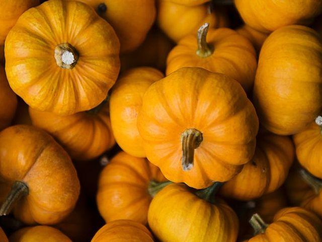 Miniture orange pumpkins at a farm in North Salem