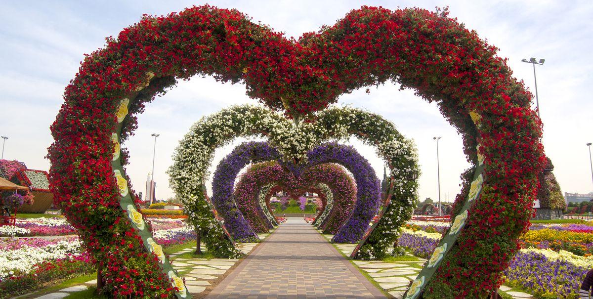 Dubai Miracle Garden: A Virtual Tour Of The Famous Flower ...