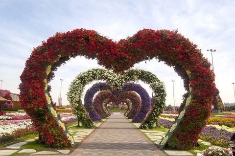 miracle garden, dubai, united arab emirate, stock image