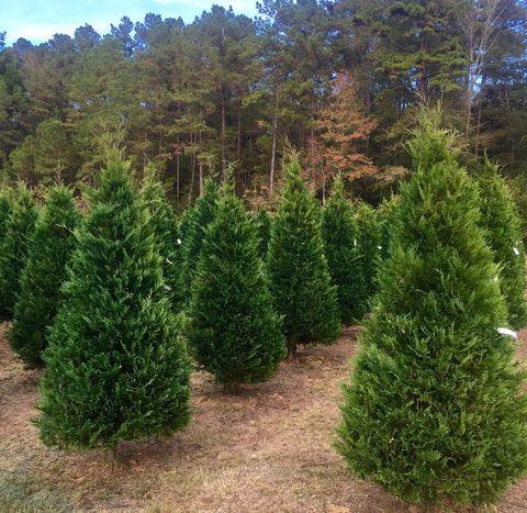 Courtesy of Timberhill Christmas Tree Farm - The Best Christmas Tree Farm In Every State In 2018 - Best Christmas