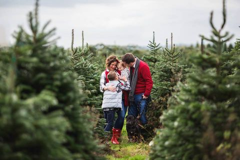 The Best Christmas Tree Farm In Every State in 2018 - Best ...