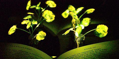 Flower, Flowering plant, Plant, Yellow, Terrestrial plant, Still life photography, Pedicel, Plant stem,