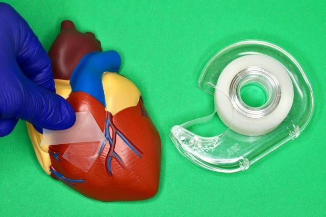 an illustration showing a model of a heart with tape on it