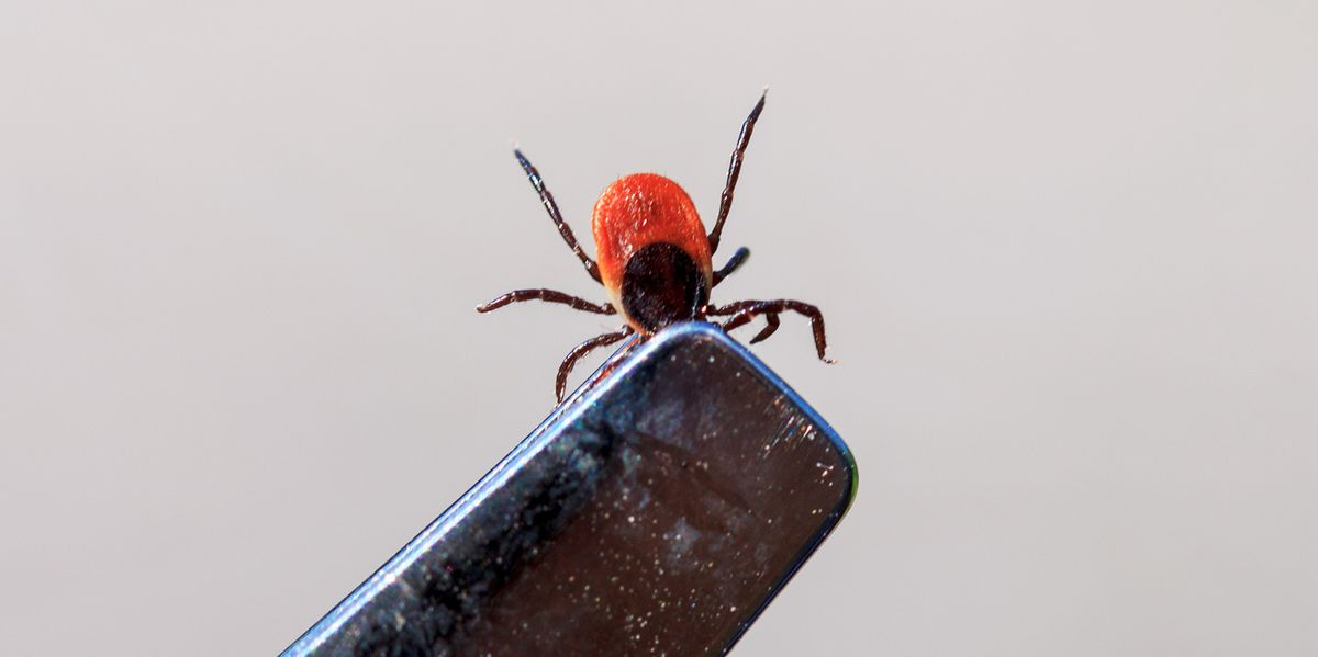 Doctor Finds Tick in Man's Eye After He Feels Persistent