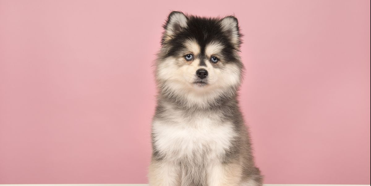 10 Mixed Breed Dogs Dog Breeds