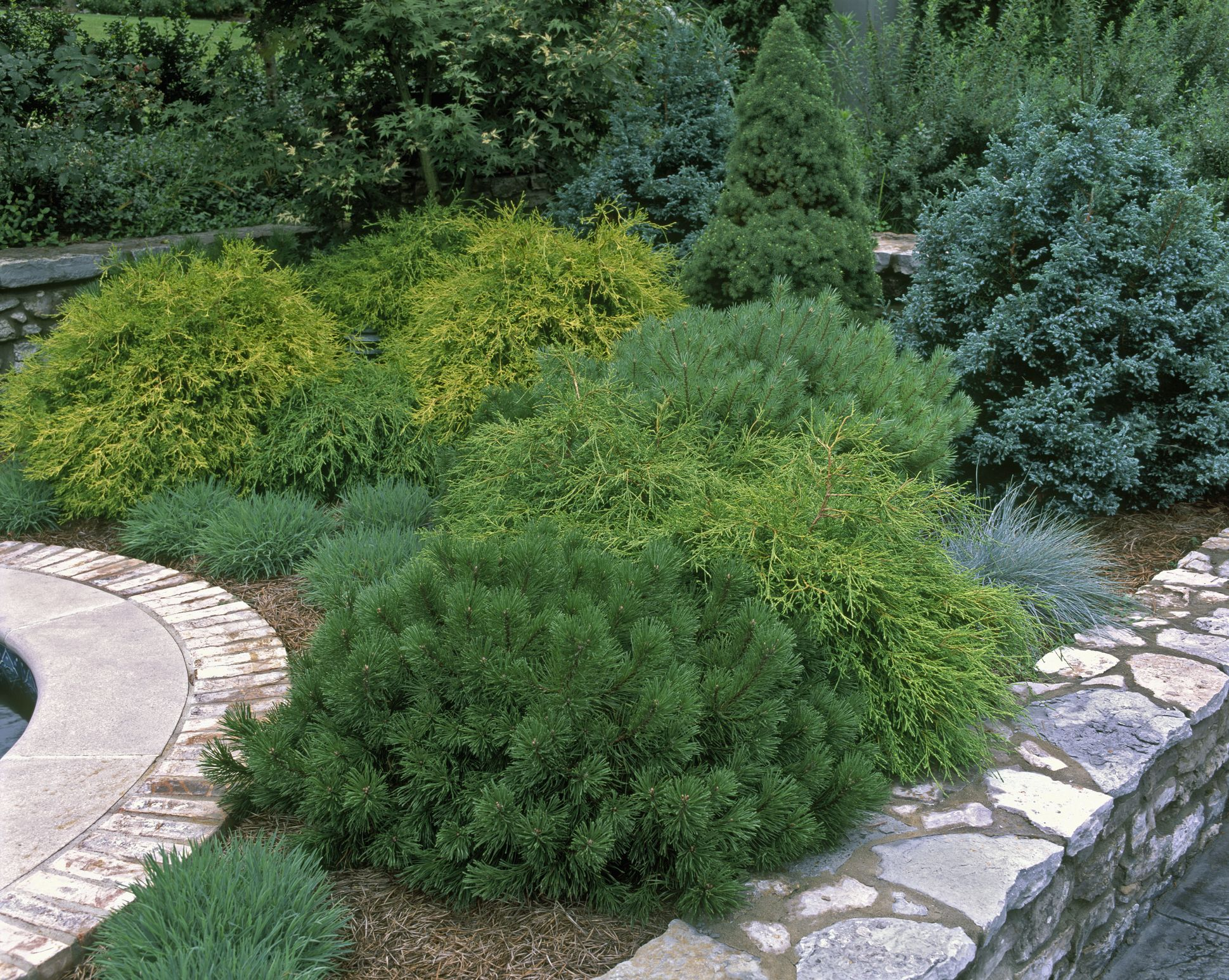 20 Essential Evergreen Shrubs for a Gorgeous Garden Year-Round