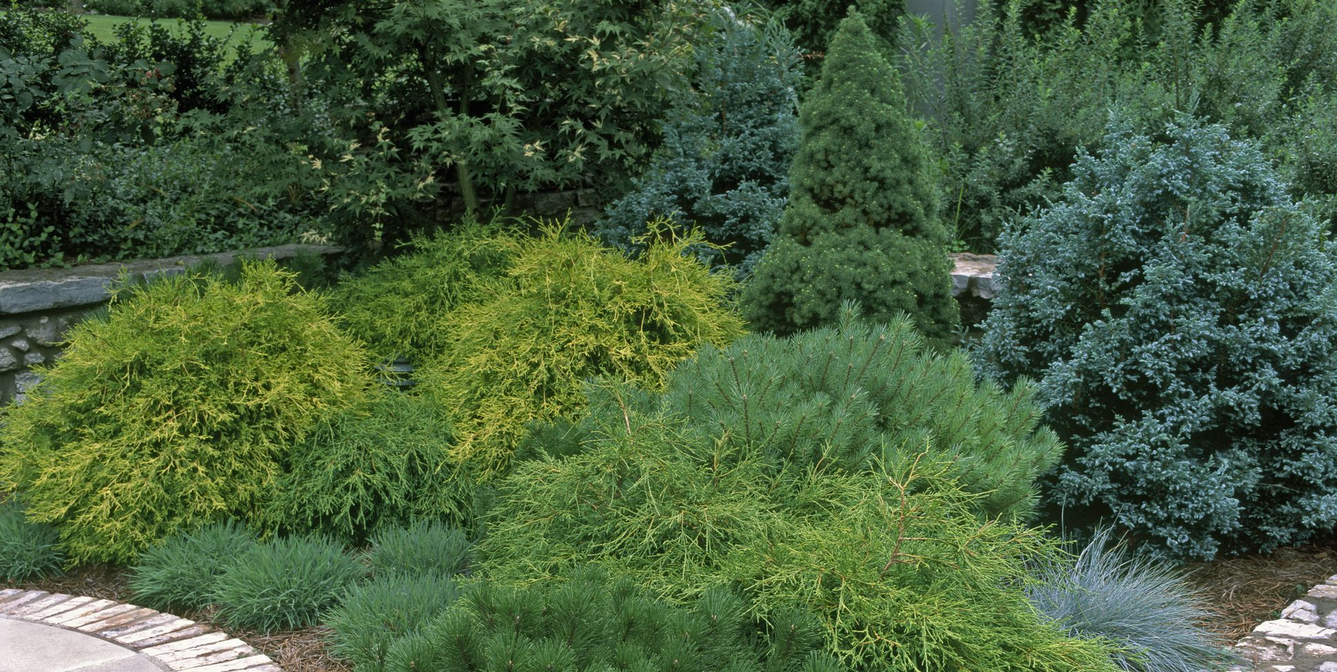 Here Are the Best Evergreens for Adding Year-Round Beauty to Your Backyard