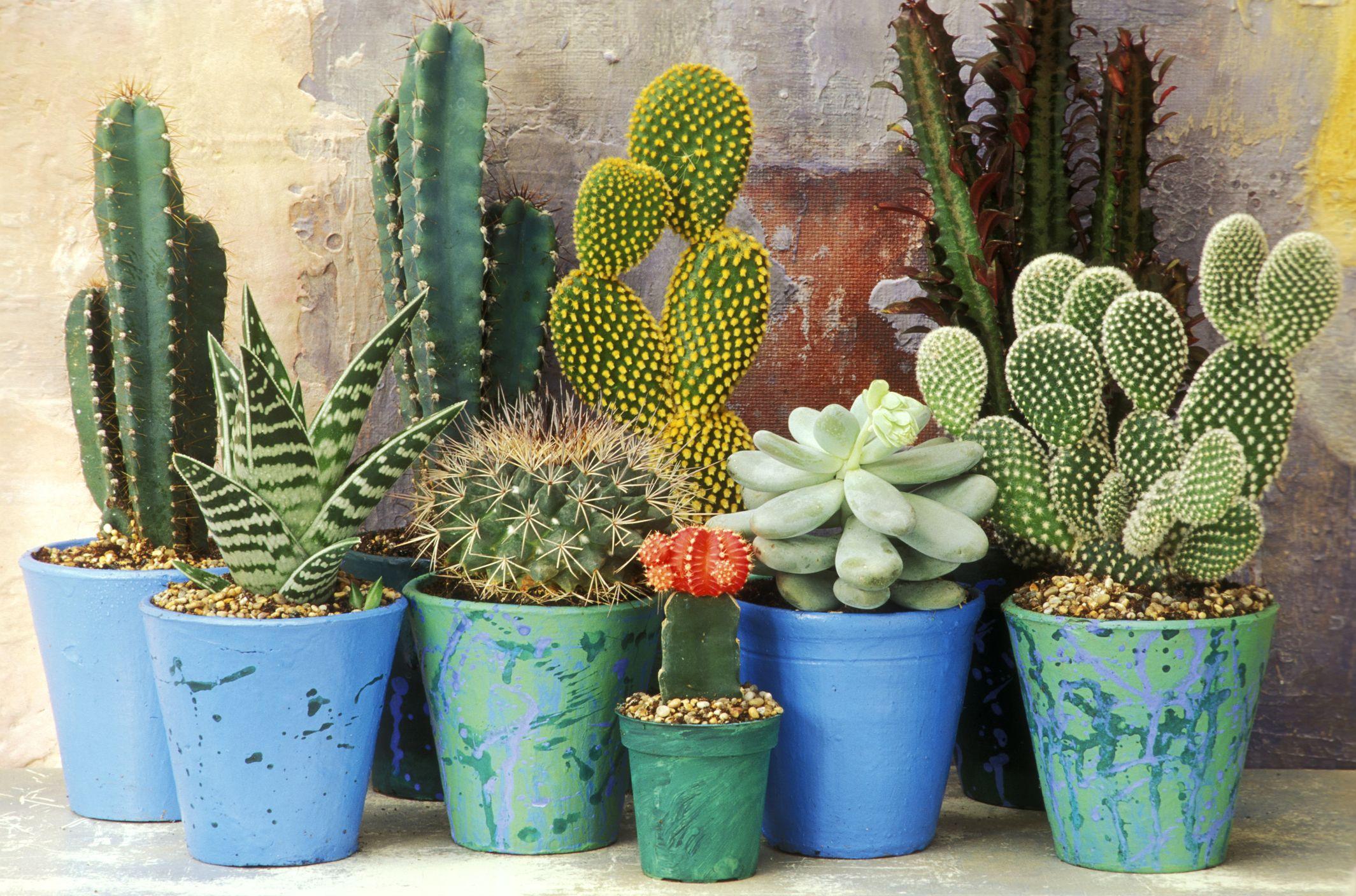 How to grow a cactus