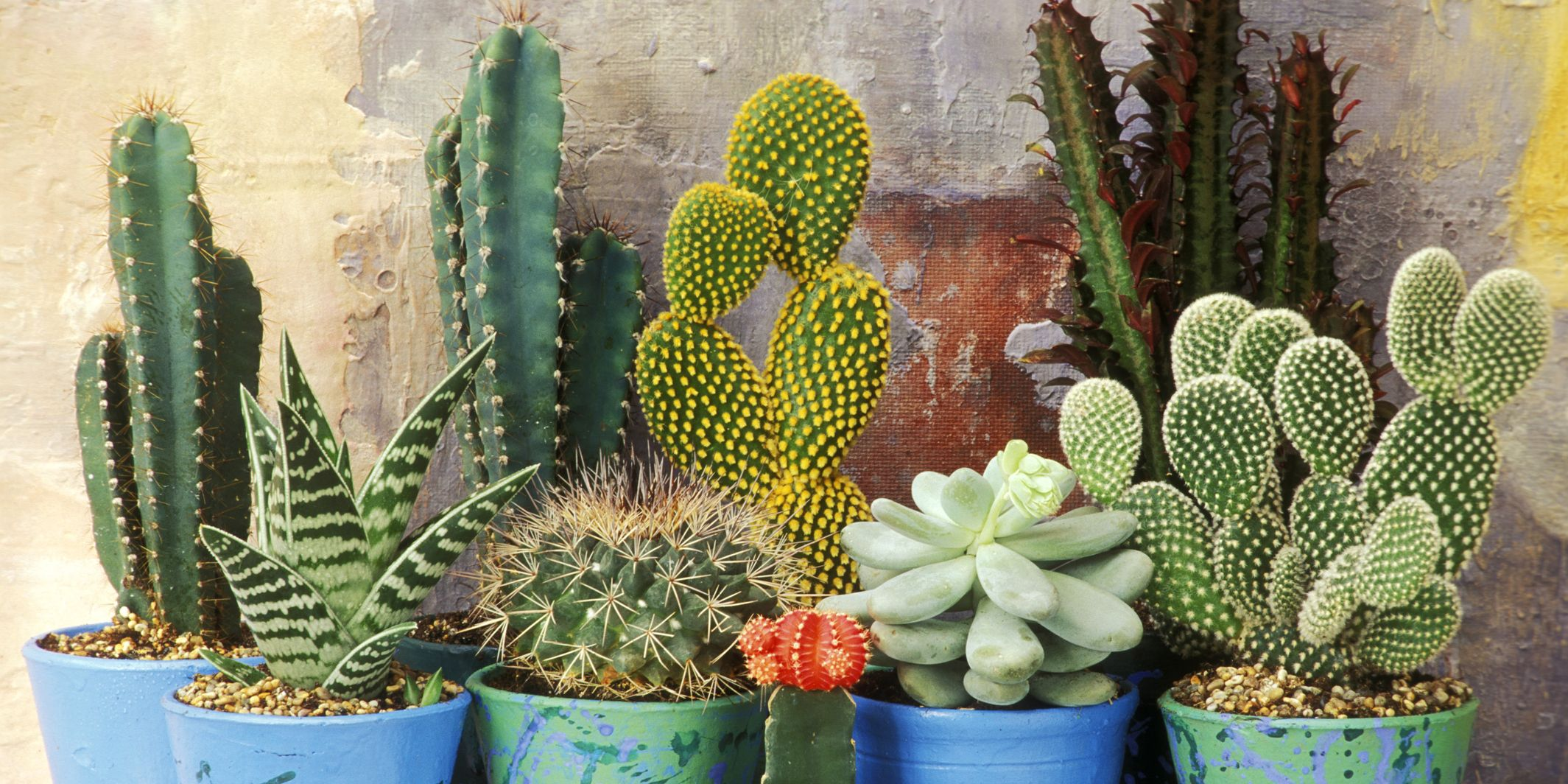 Mixed display of cacti and succulents