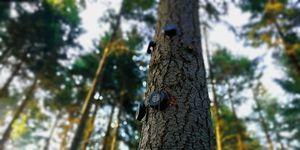 Tecnología que permite escuchar a los árboles