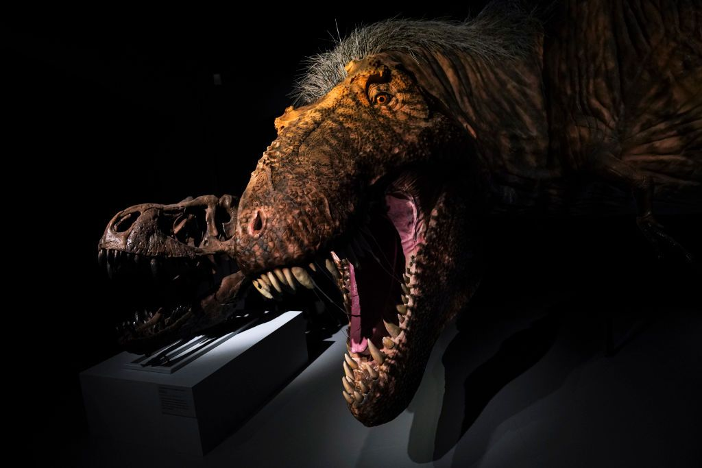 Someone Is Trying To Sell A Baby T Rex Skeleton On Ebay For 2 95