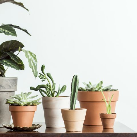 Modern composition of home garden with different plants in red clay pots on the brown shelf. Concept of copy space in design room.