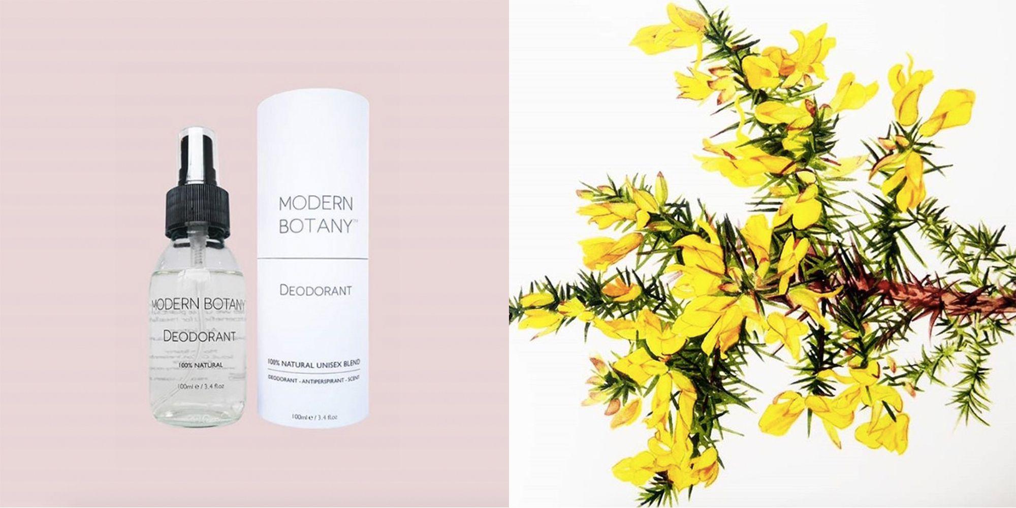 Modern Botany Deodorant