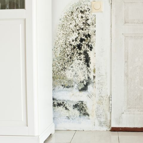 Mould Growth on Wall and Damp Stained Wood Door