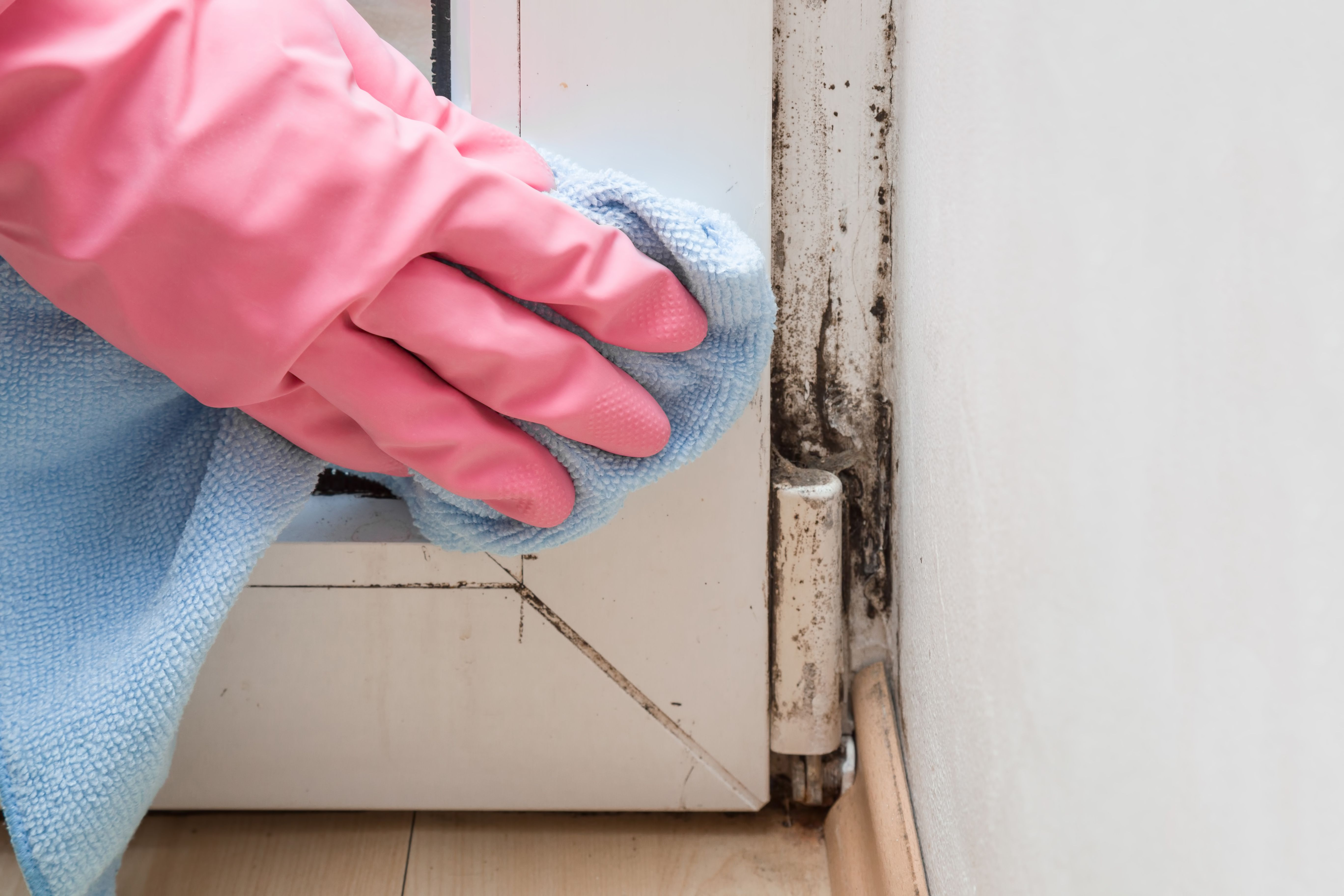 How To Id The Diffe Kinds Of Mold In Your House And Their Cause