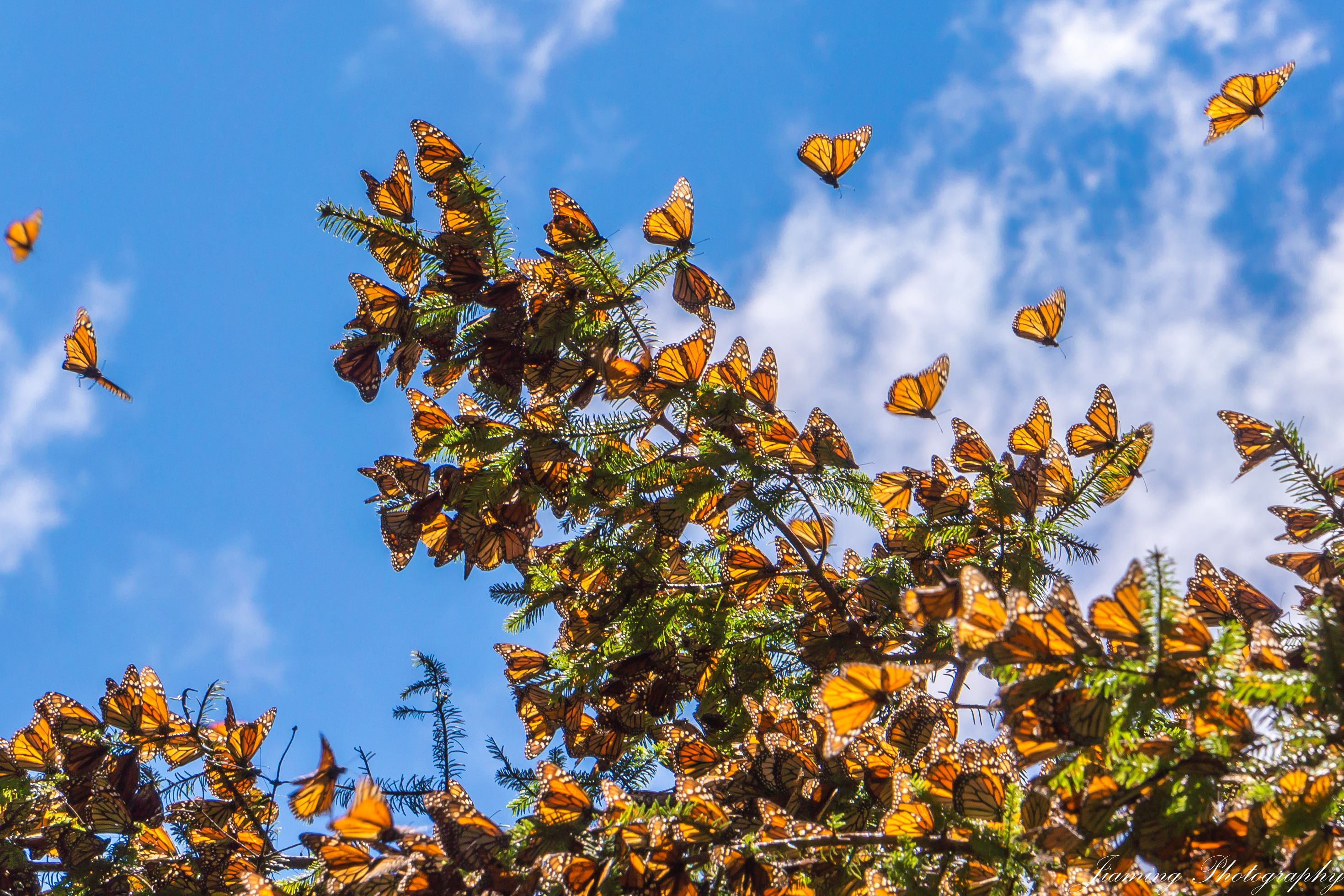This $15 Plant From Amazon Will Turn Your Backyard Into a Monarch Butterfly Paradise