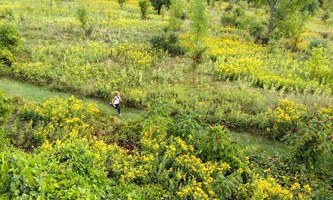Vegetation, Nature, Natural landscape, Nature reserve, Natural environment, Plant, Plant community, Shrubland, Groundcover, Grass,
