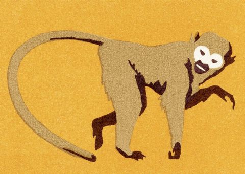 Tail, Lemur, Primate, Visual arts, Illustration,