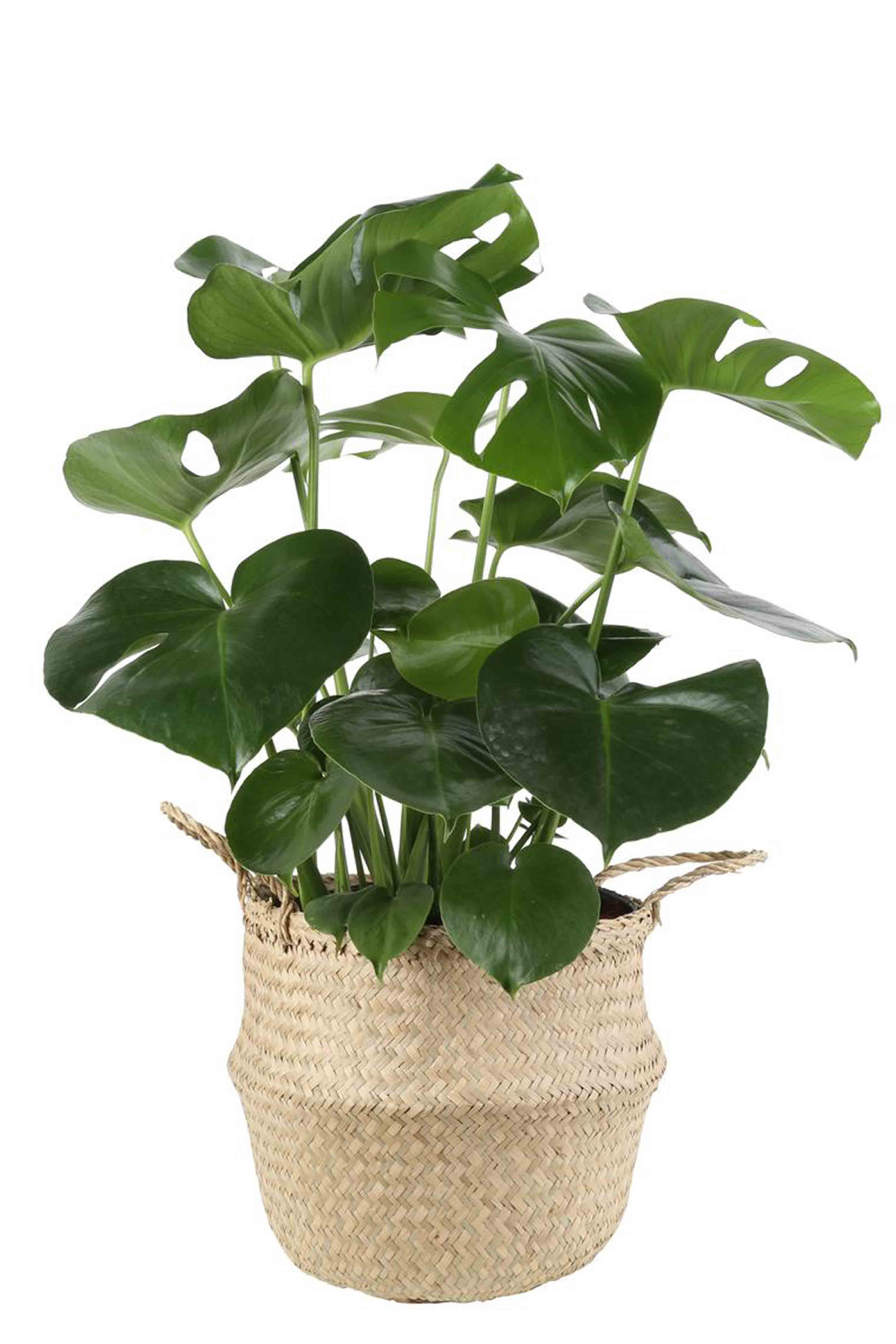 25 Best Indoor Plants For Apartments Low Maintenance City Dwellers