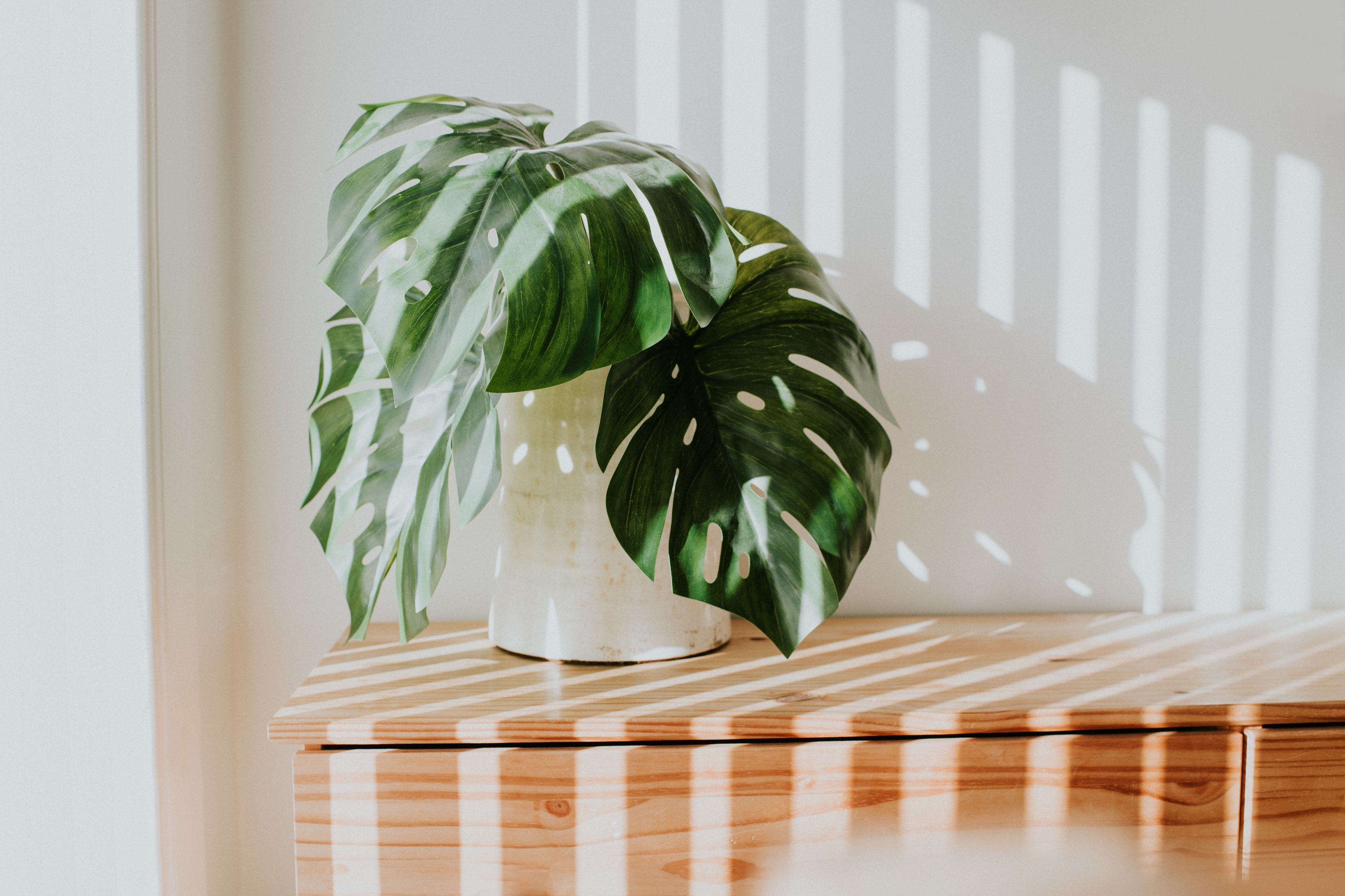 Revive Dying Plants With Banana Infused Water Plant Hack